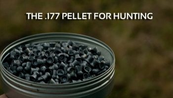The .177 Pellet for Hunting