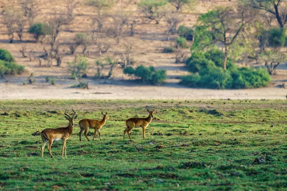 Deer Hunting in Texas 1